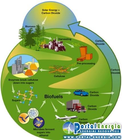 ciclo energia biomassa Vantagens e Desvantagens da Energia Biomassa