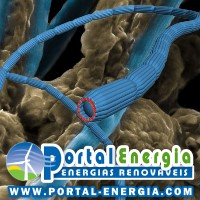 bacteria-transmissora-energia-eletrica