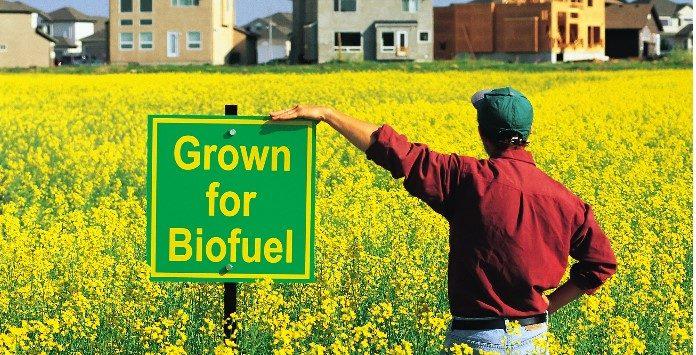 biocombustiveis desvantagens