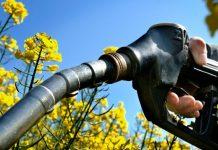 biodiesel-combustivel