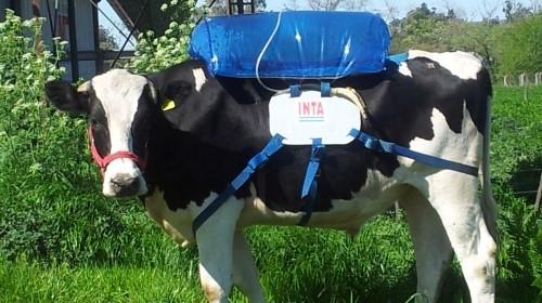 biogas-vaca-grande