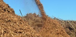 biomassa-florestal