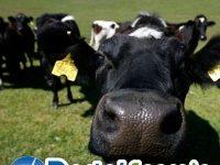Vantagens e desvantagens da Energia do Biogás
