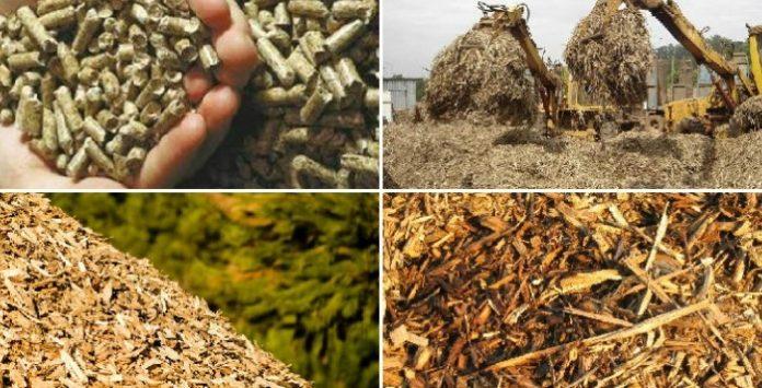 energia-da-biomassa