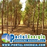 floresta arvores oryzon energias
