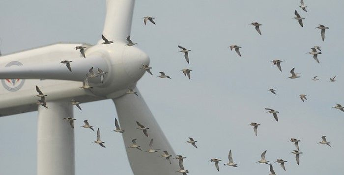 morte-aves-energia-eolica