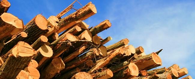 residuos-florestais